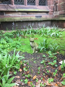 Cat in Chester Cathedral
