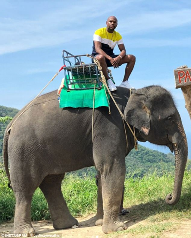 Floyd Mayweather rides a giant elephant in Thailand as he continues to enjoy his retirement (Photos)