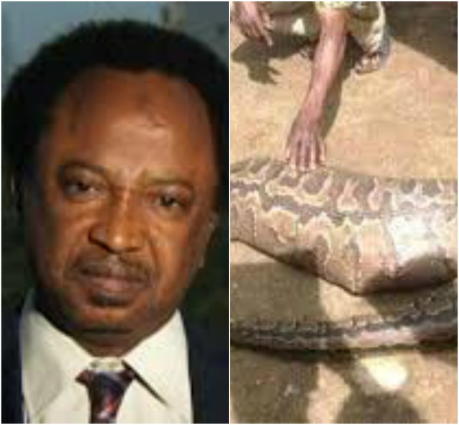 5a82feb749e2f - Senator Shehu Sani storms JAMB office with snake charmers to search for the N36 million swallowed by a mystery snake...lol