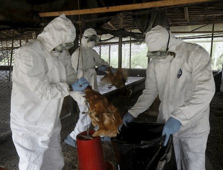 5a84432e7ff78 - Lagos State securesN42million compensation for26 farmers whose farms were affected by the Bird Flu in 2015