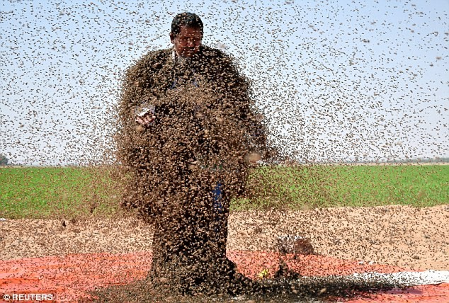 Man tries to cover himself with 20,000 bees in his second attempt to make it into the Guinness Book of Records (Photos)