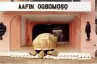 Alagba, the oldest Tortoise in Africa living in Soun of Ogbomoso