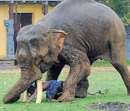 Elephant kills Australian tourist in Namibia