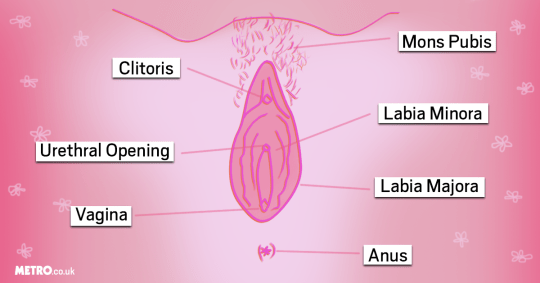 Scientist claims he has uncovered why women have clitoris