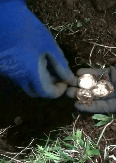 Man finds ?100,000 gold haul while looking for his mate?s wedding ring with a metal detector