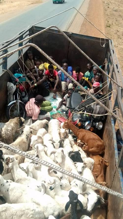 Two lorries transporting passengers hidden with livestock from Kano to Kaduna is intercepted by security officials