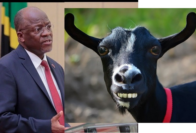 Tanzanian President Magufuli orders probe on COVID-19 kits after goat tests positive