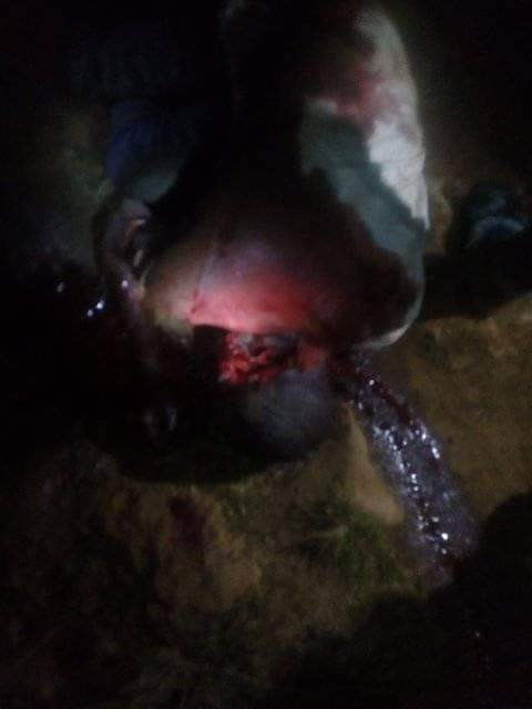 Traditional ruler, five others killed as suspected Fulani militia attack Plateau State community
