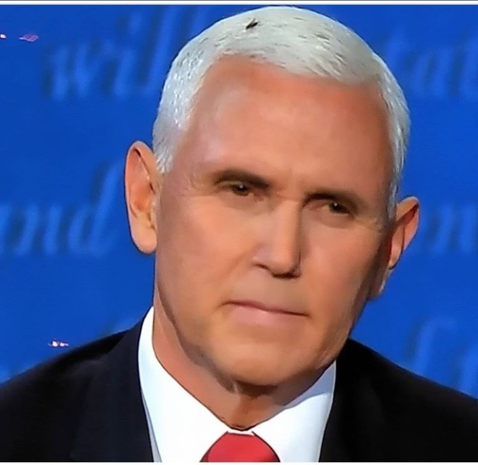 Americans react after fly landed on Mike Pence's head and remained there during the US Vice Presidential debate, Americans react after fly landed on Mike Pence's head and remained there during the US Vice Presidential debate, Premium News24