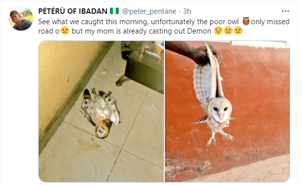 Twitter user narrates how his mother has been casting out demon from an owl that missed its way