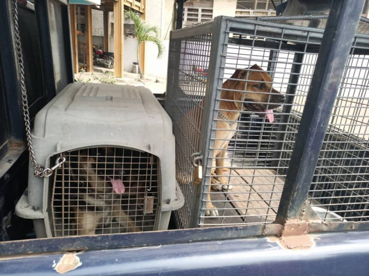 Lagos police arrests man for unleashing his dogs on a female police officer (photos)
