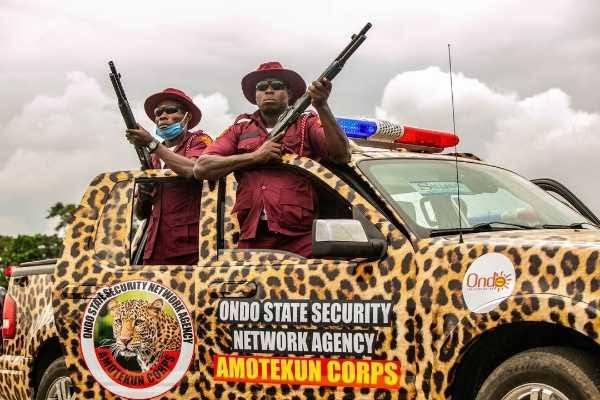 Amotekun 'arrests' 400 cows in Ondo