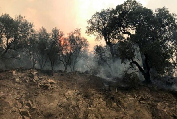 42 people killed as wildfire rips through Algeria (photos)