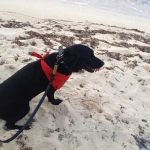 skittles rescue dog jamaica beach