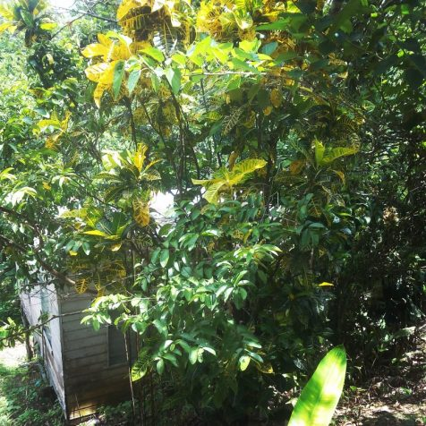 Childhood Home, Jamaica