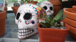 Skull - New York Botanical Garden
