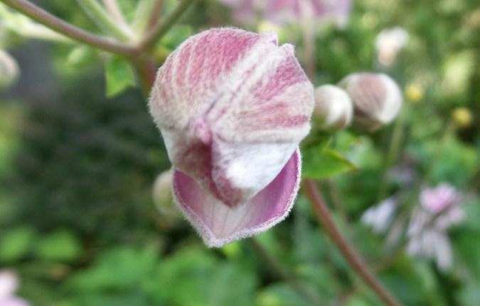 flower nature hiking nature new york