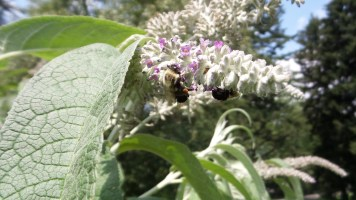 New York Botanical Garden bees flower travel