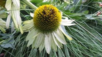 New York Botanical Garden sunflower travel