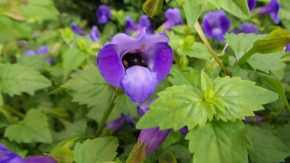Mooned by a Bee - New York Botanical Gardens