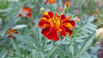 Red Flower - New York Botanical Gardens