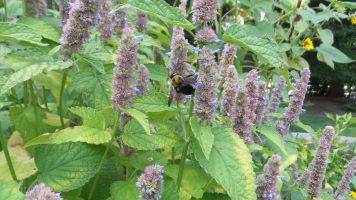Bee on Flower - New York Botanical Gardens