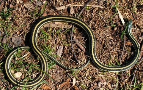 ribbon snake travel new york adventure
