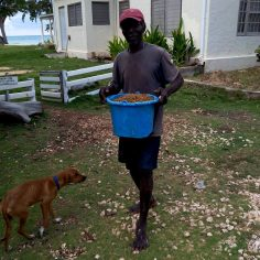 dog food animals stray travel jamaica adopt don't shop