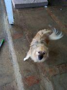 dog animal shelter jamaica travel