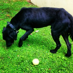 skittles animal shelter dog jamaica travel volunteer