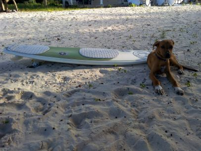 dog surfboard adventure travel jamaica beach