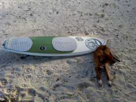 dog surboard beach jamaica travel adopt don't shop