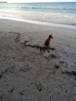 dog beach jamaica travel adopt don't shop