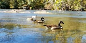 ducks pond hiking trail travel