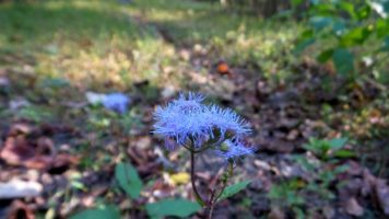 Purple Flower on the Trail