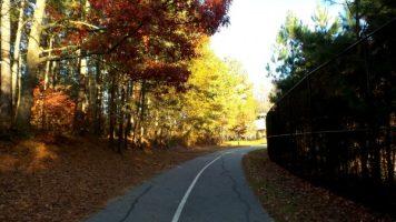Fiery Leaves at Autumn - Atlanta, Georgia