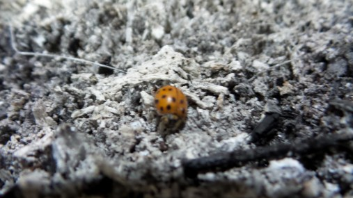 ladybug nature travel