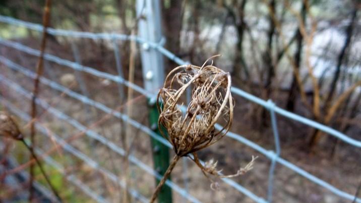 hiking trail travel dead plant autumn