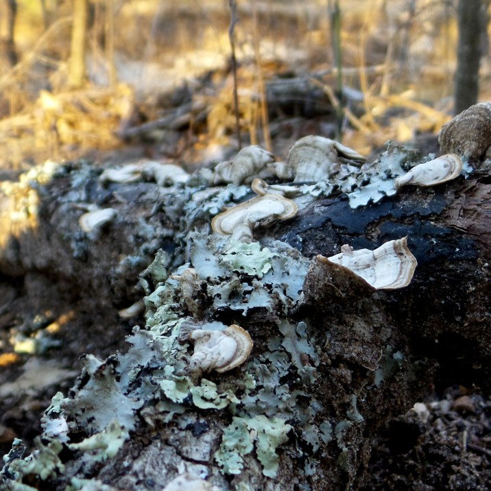 fungi nature photography hiking trail travel explore