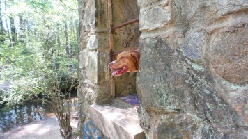 stone dog curious animal rescue