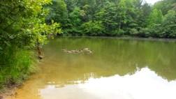 ducks park trail waterscape nature