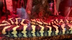 atlanta georgia stone mountain snake