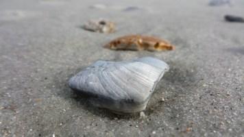 myrtle-beach-finds-2