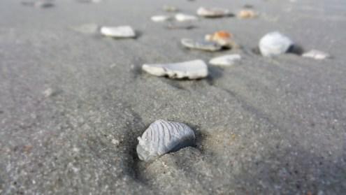 myrtle-beach-finds-7