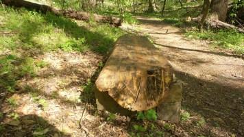 11 Log Bench on Deepdene Park Trail