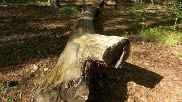 33 Deepdene Park Tree