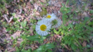 46 Flowers on the Georgia Hiking Trails