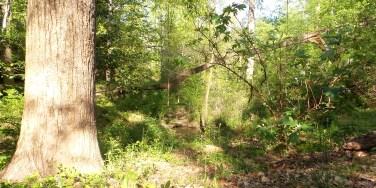 55 Deepdene Park Trees