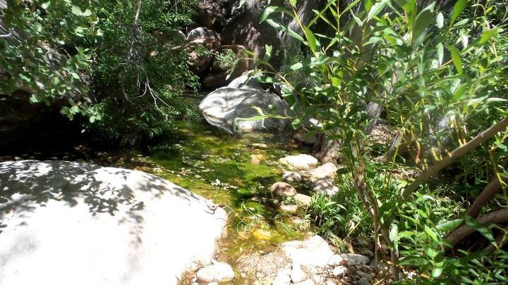 4 Red Rock Canyon Murky Stream.jpg