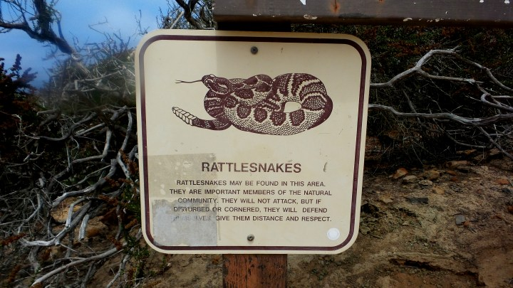16 Torrey Pines Rattlesnake Sign.jpg
